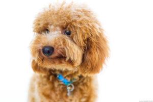 A dog's portrait by Hendra Lauw