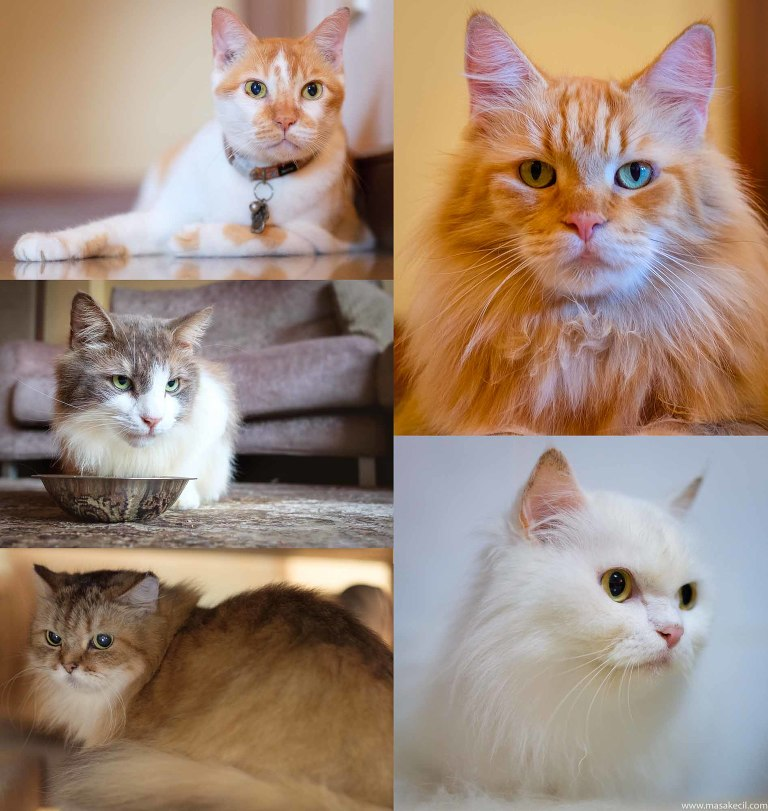 Five lovely cats. Photography by Masakecil.